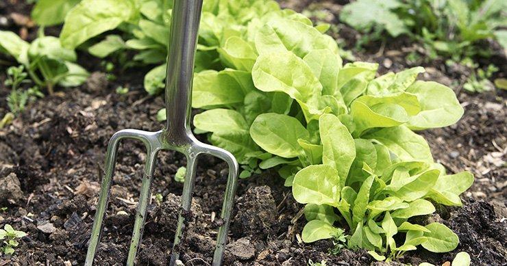 What's the Difference? Garden Soil vs. Potting Soil